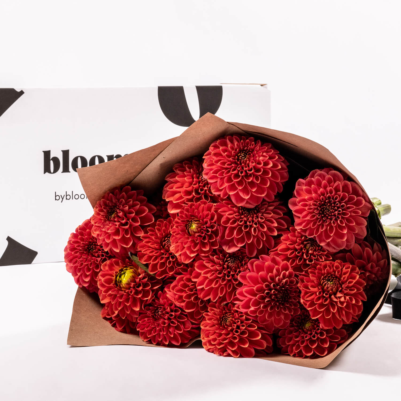 Bloom Flower Delivery | Orange Marmalade Dahlia