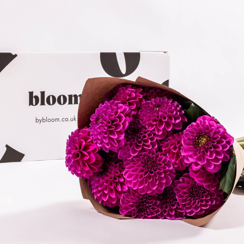 Bloom Flower Delivery | Purple Rain Dahlia