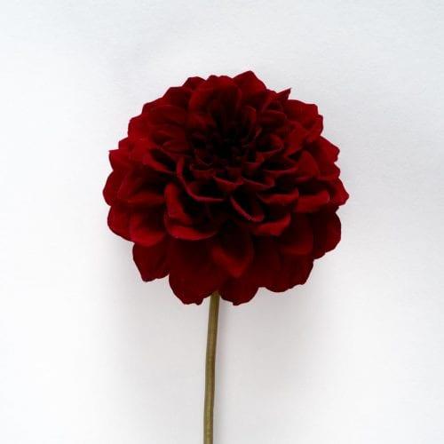 Bloom - Merlot Red Dahlia