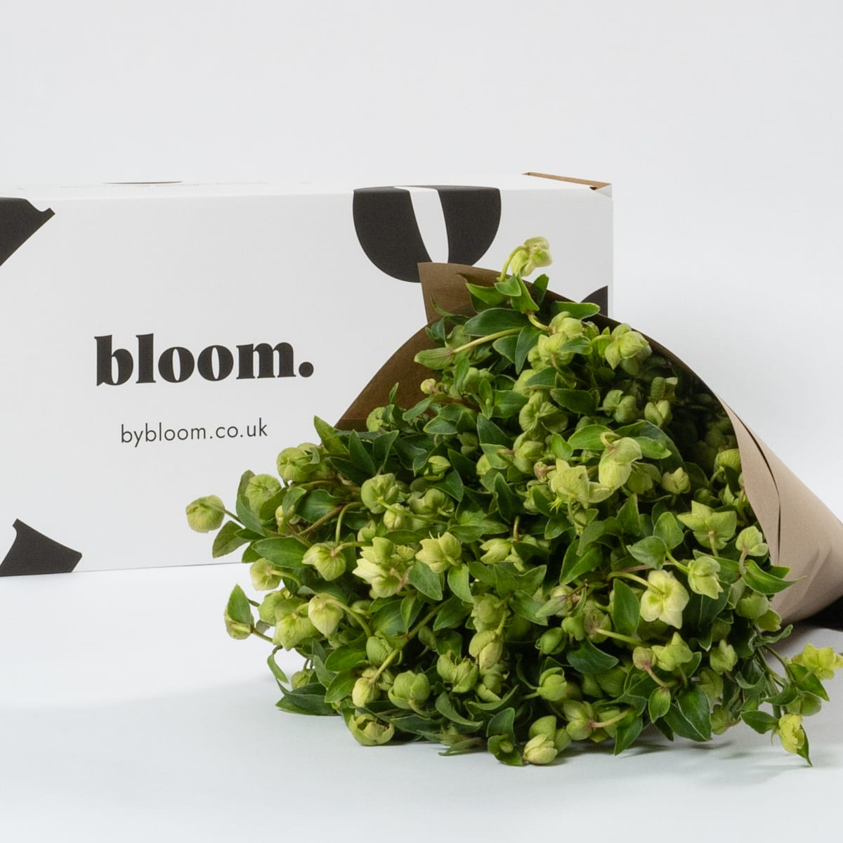 Bloom Flower Delivery | Pickle Green Hellebores