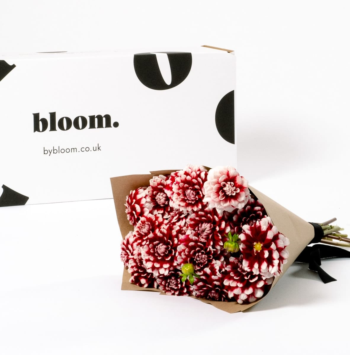 Bloom Flower Delivery | Candy Cane Dahlia