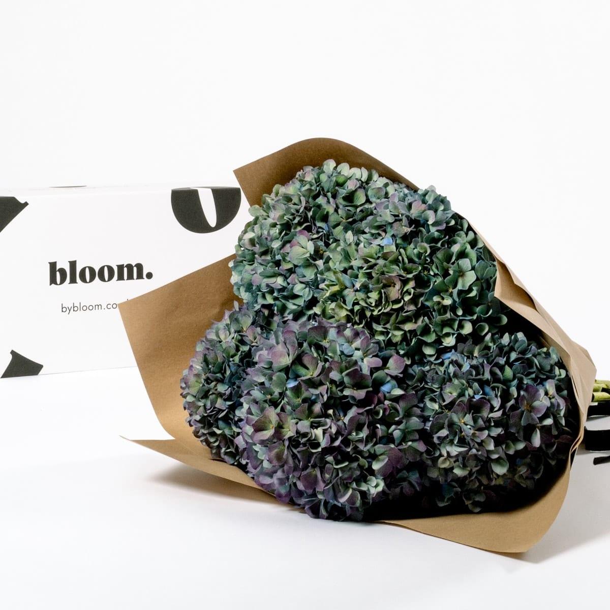 Bloom Flower Delivery | Winter Sky Blue Hydrangea