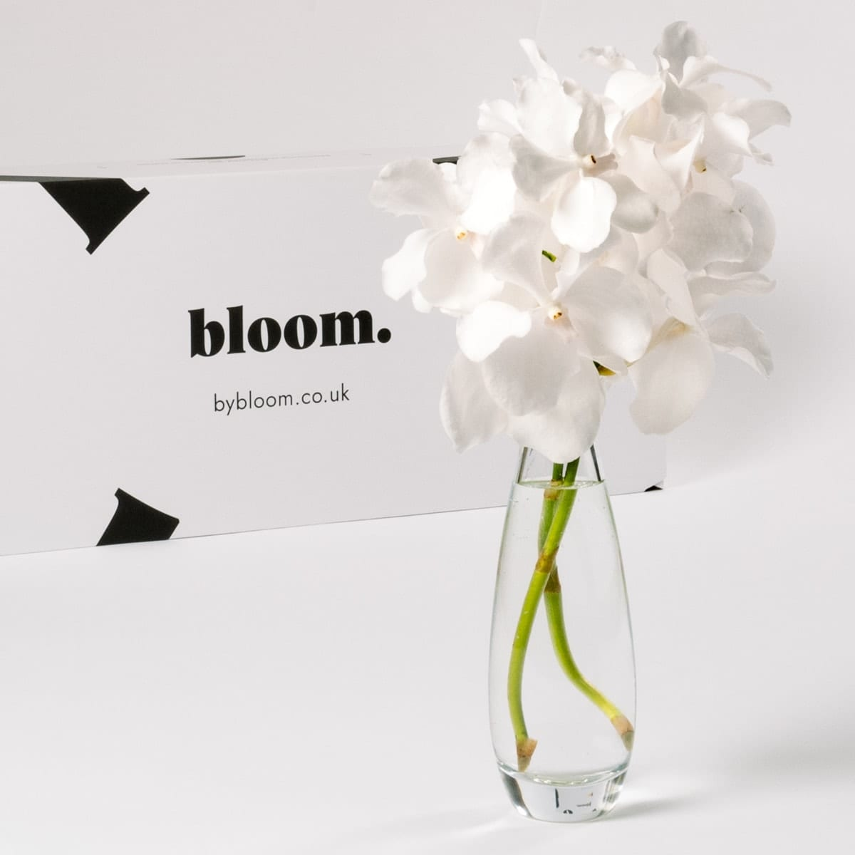 Bloom Flower Delivery | Arctic White Vanda Orchid