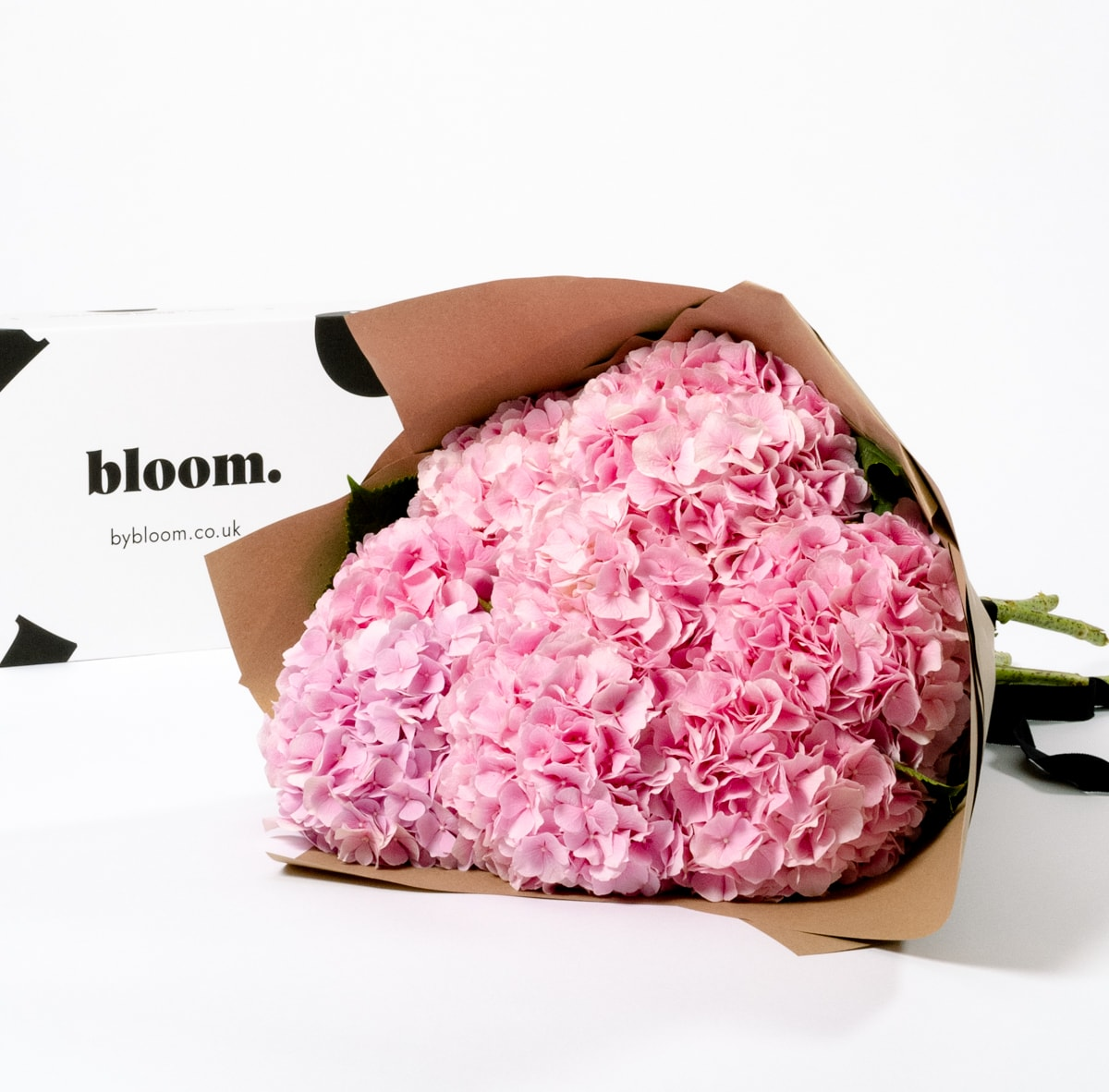 Bloom Flower Delivery | Cotton Candy Pink Hydrangea