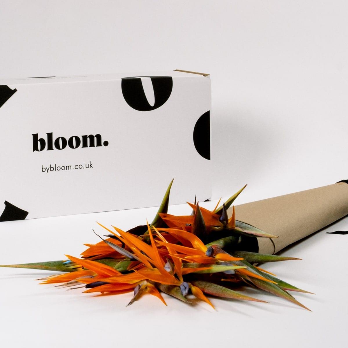 Bloom Flower Delivery | Orange Birds of Paradise