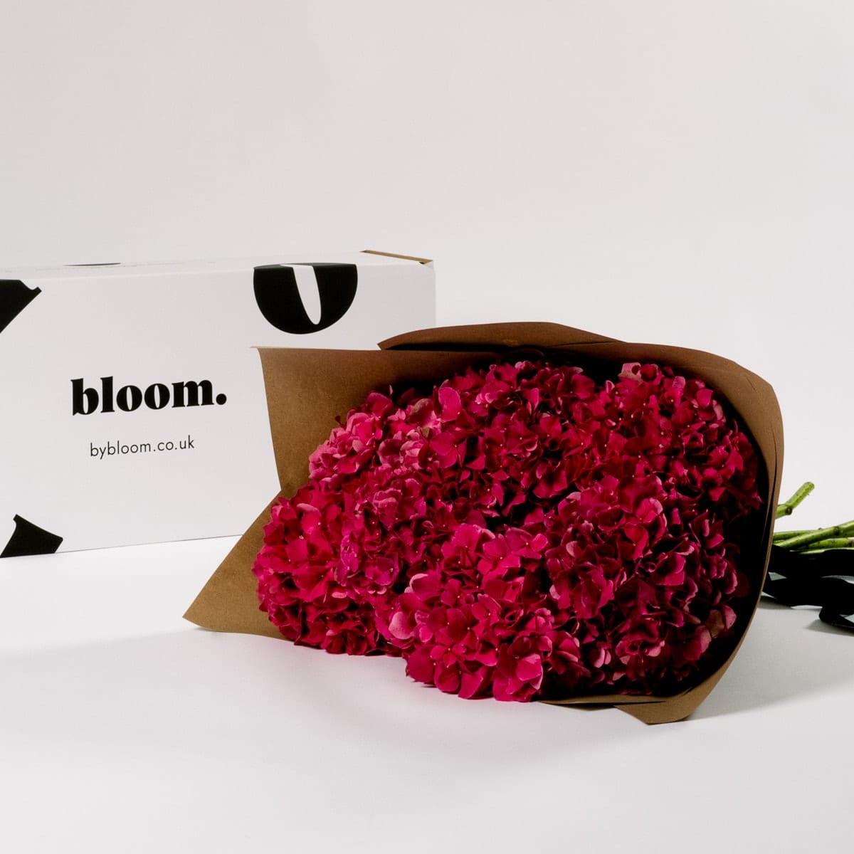 Bloom Flower Delivery | Raspberry Red Hydrangea