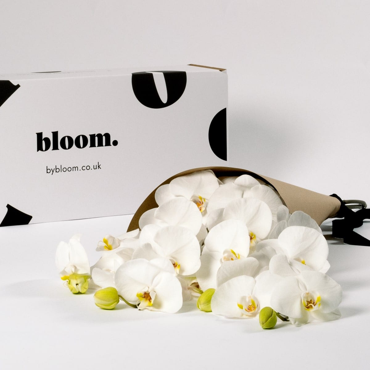 Bloom Flower Delivery | Cloud White Phalaenopsis Orchid