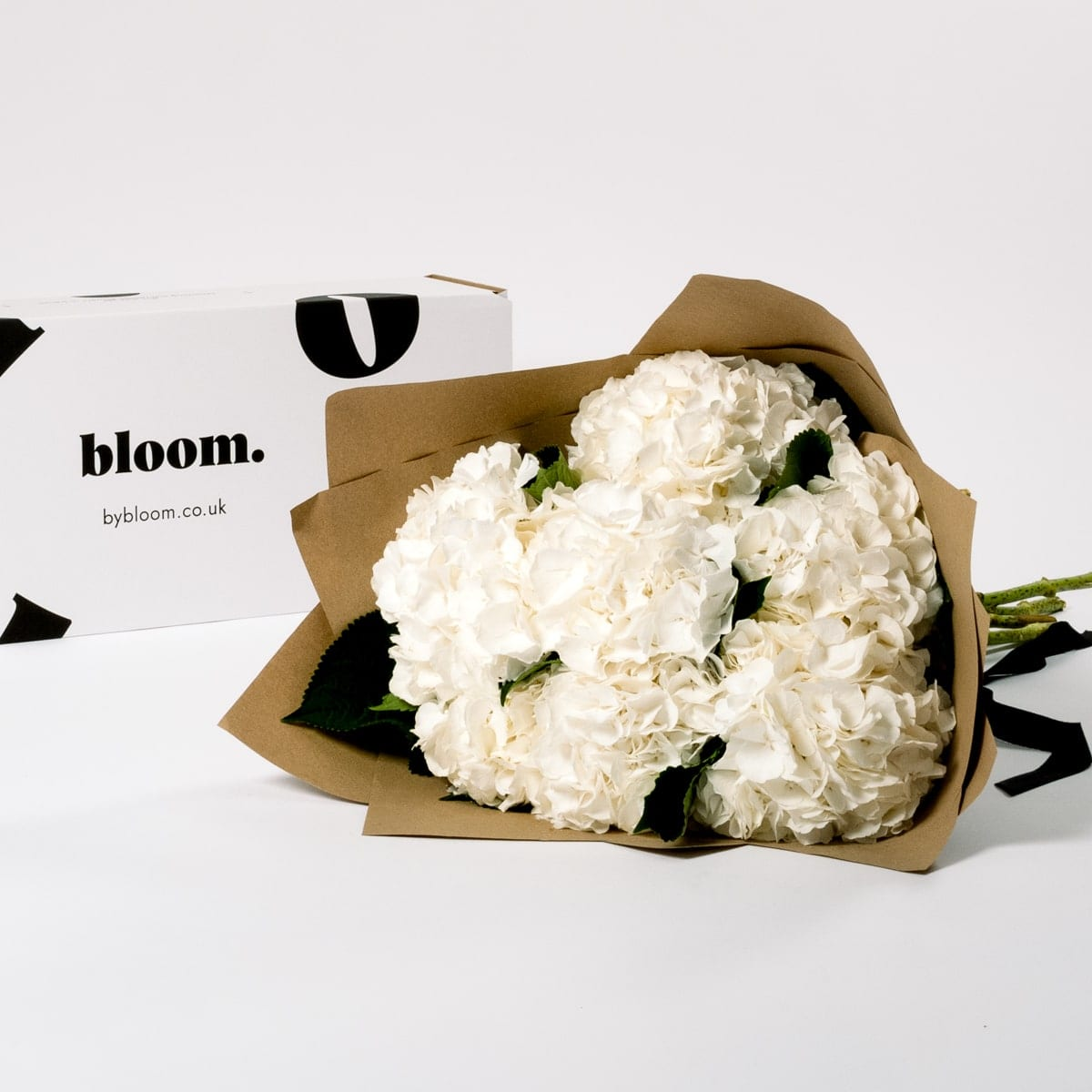 Bloom Flower Delivery | Cloud White Hydrangea