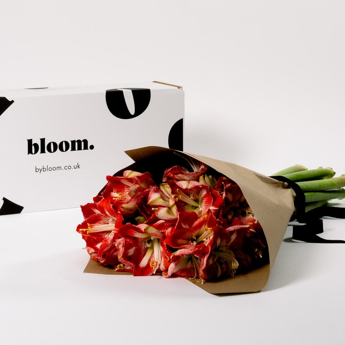 Bloom Flower Delivery | Candy Cane Amaryllis