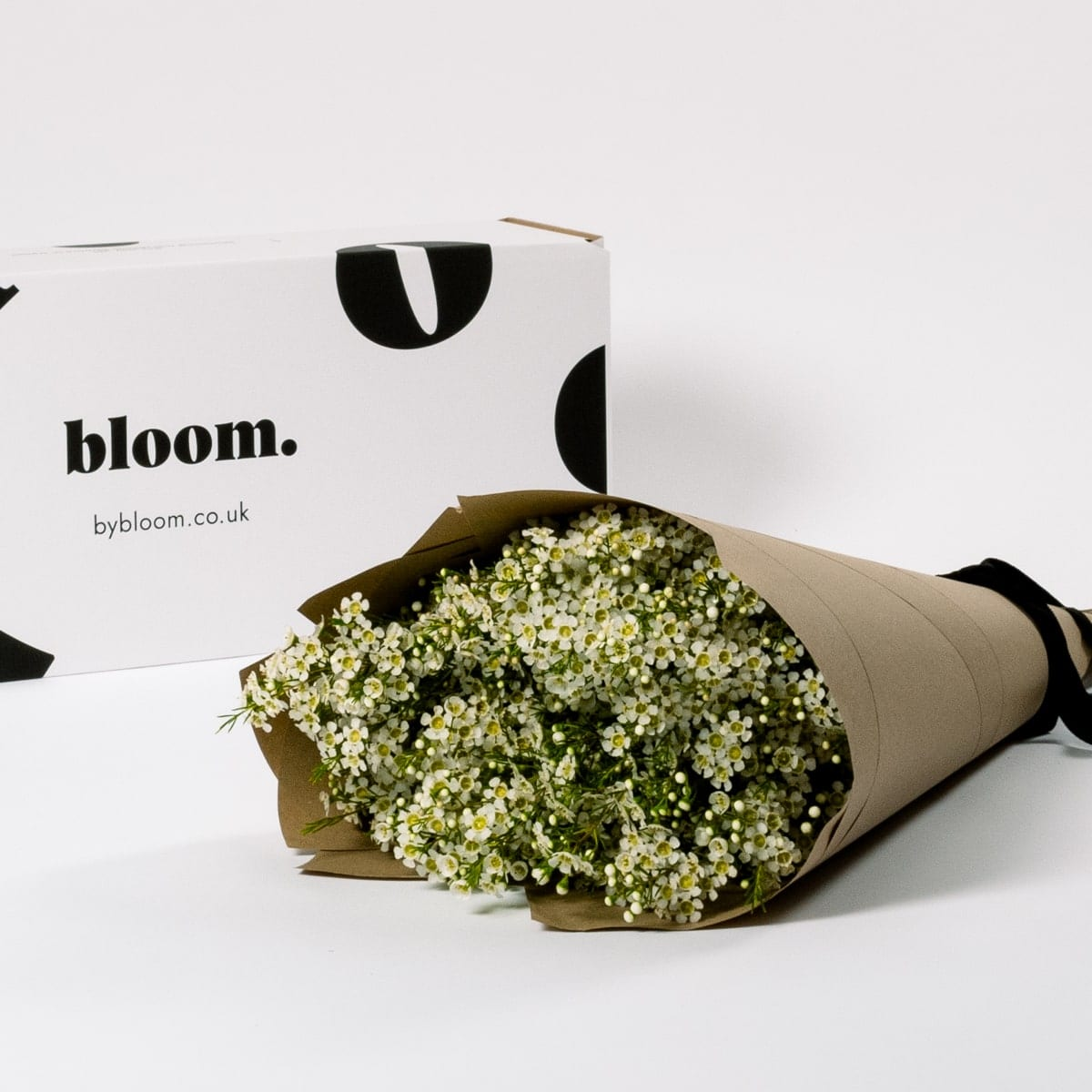 Bloom Flower Delivery | Cloud White Wax Flower