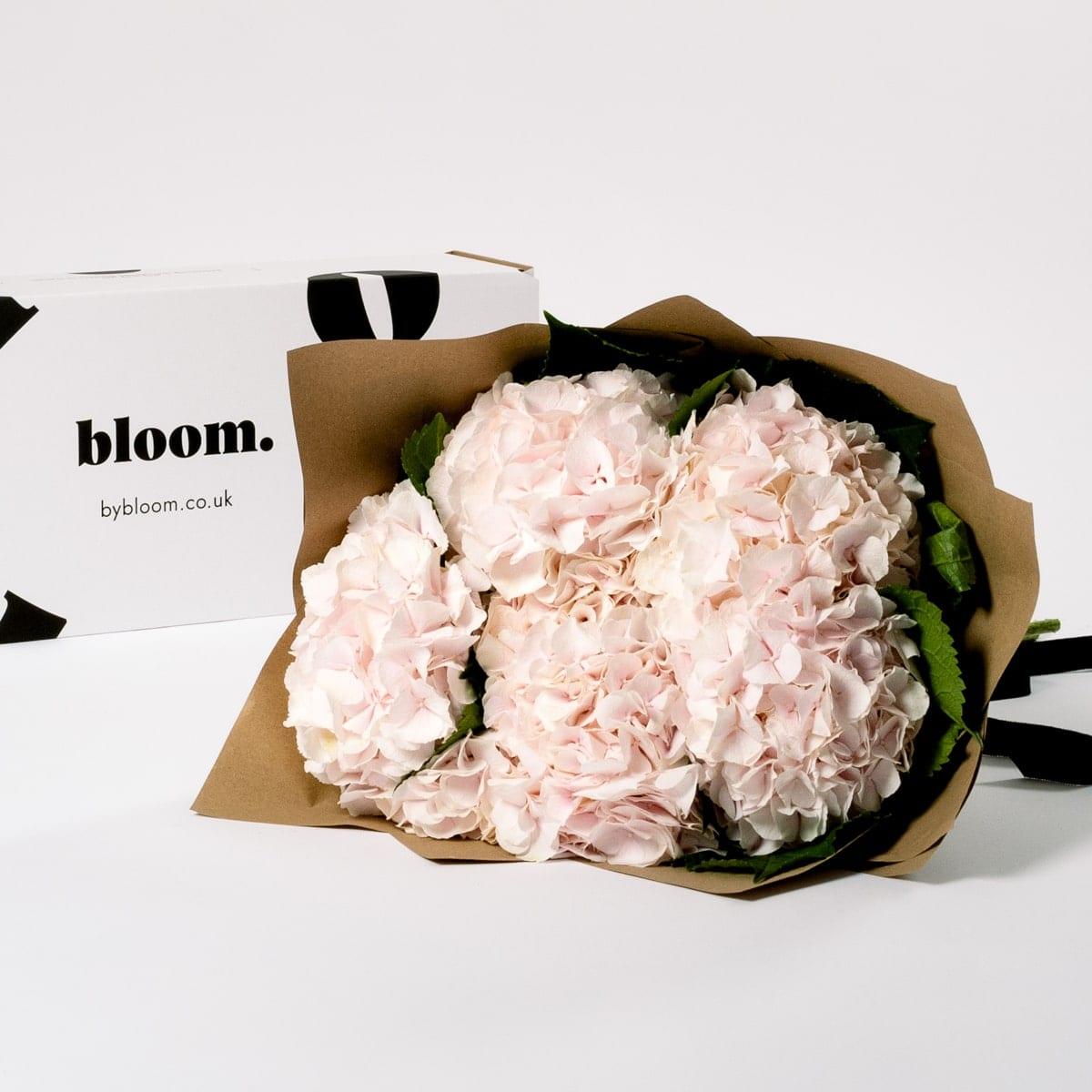 Bloom Flower Delivery | Ballet Slipper Pink Hydrangea