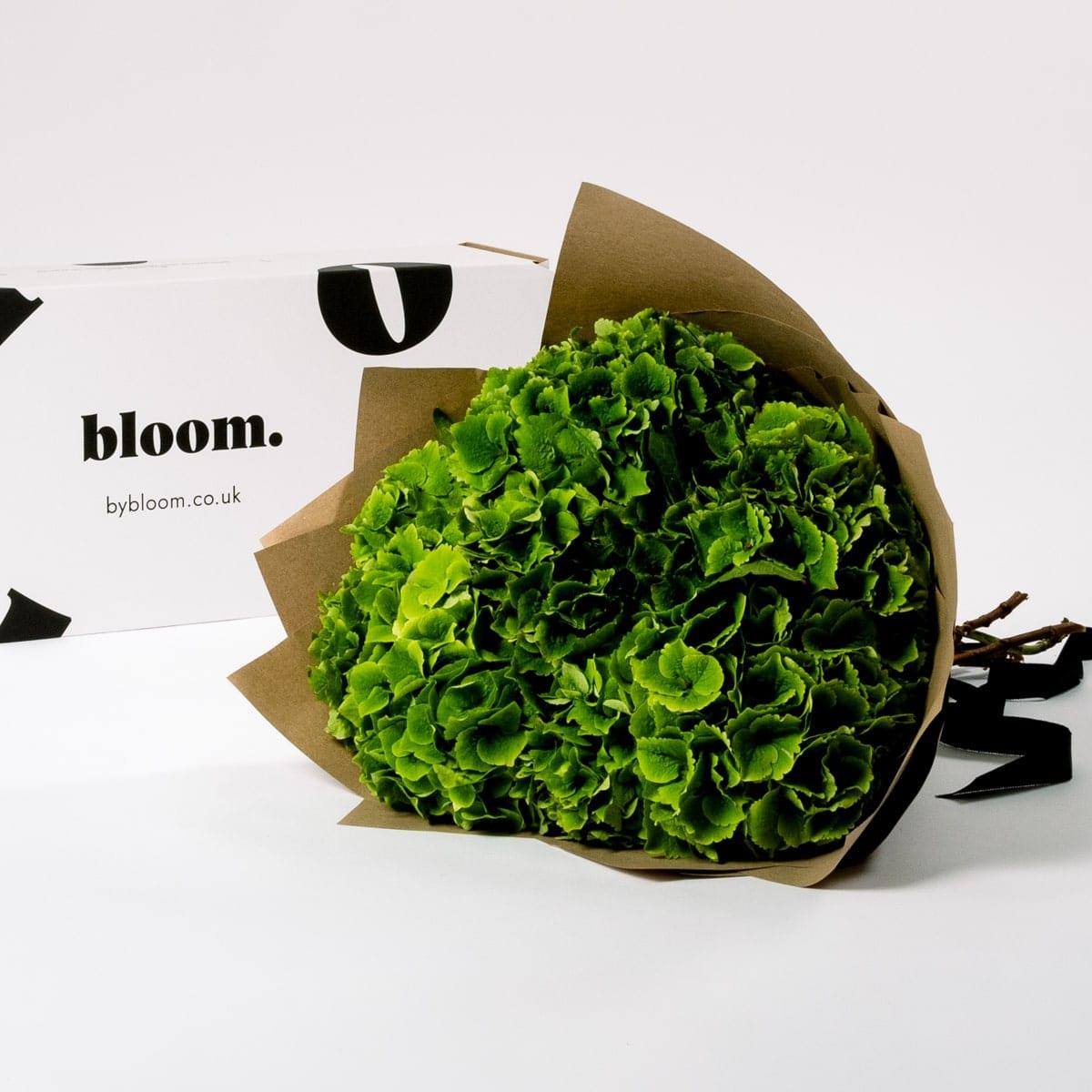 Bloom Flower Delivery | Pickle Green Hydrangea
