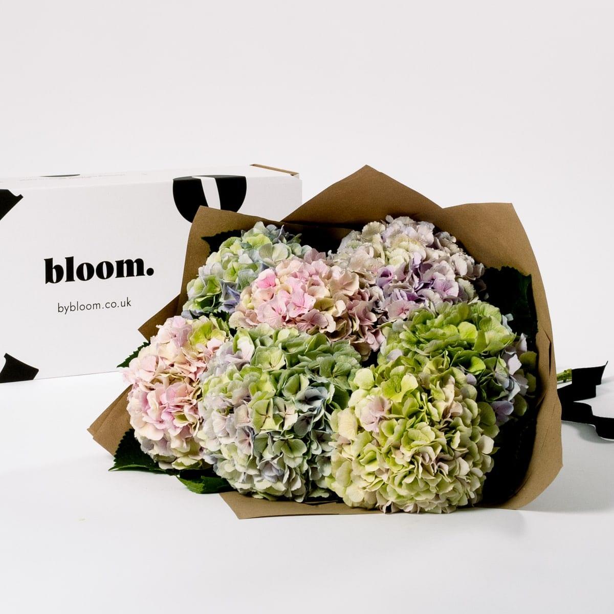 Bloom Flower Delivery | Pastel Mix Hydrangea