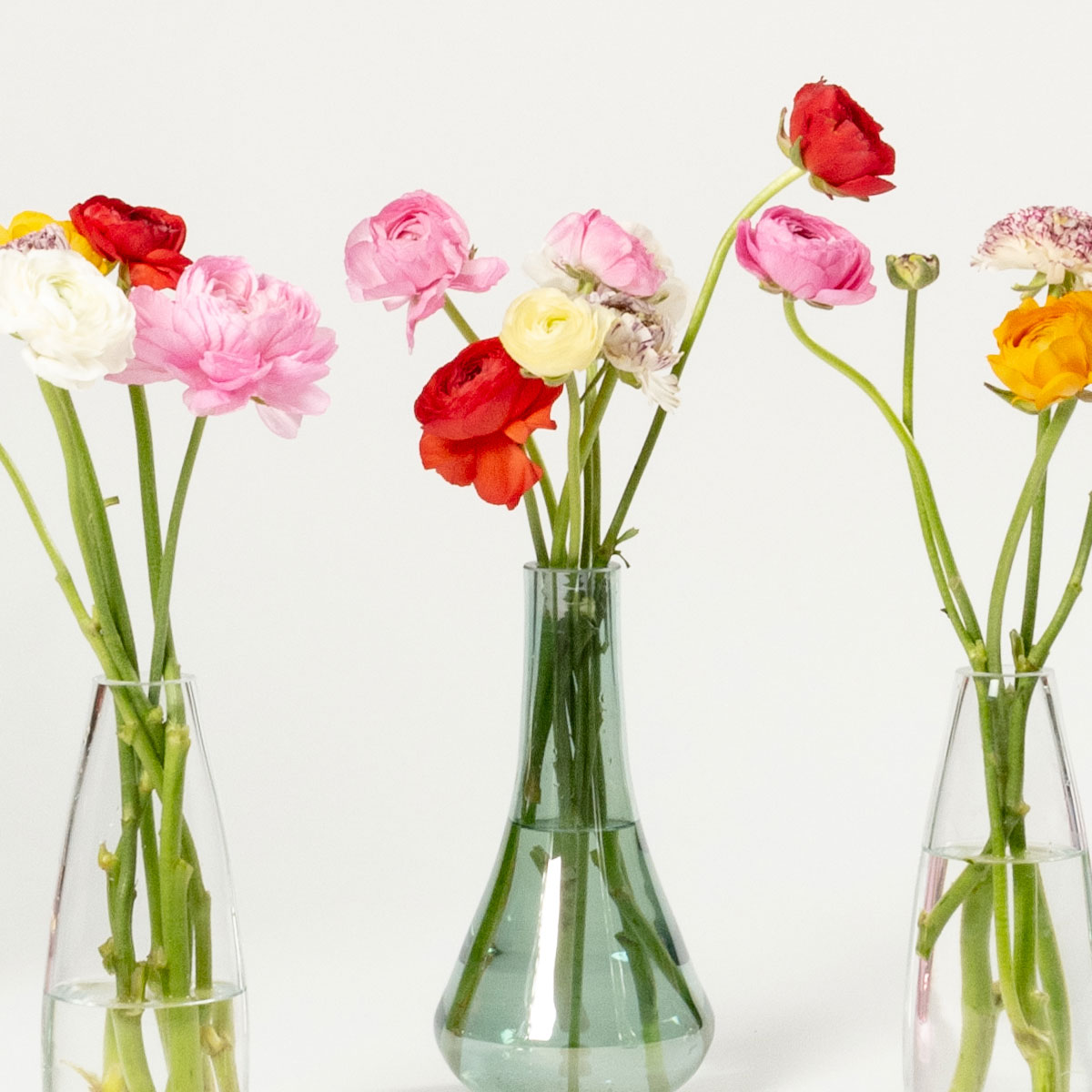 Bloom Flower Delivery | Mixed Colour Ranunculus