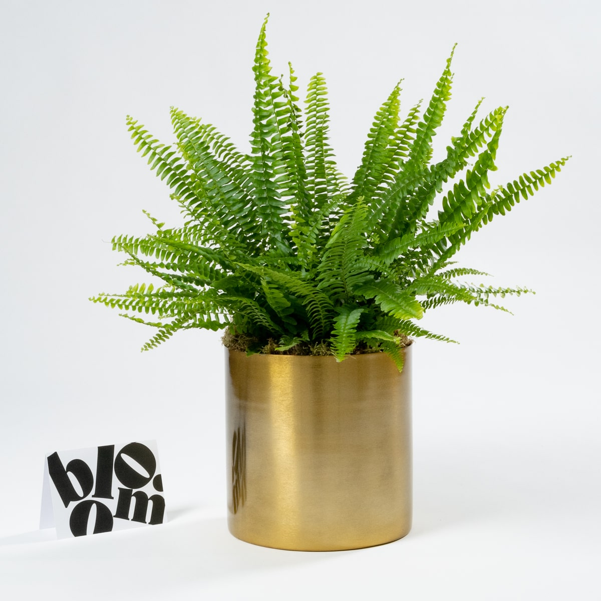 Bloom Flower Delivery | Flash Sale: Tall Brass Plant Pot & Vase