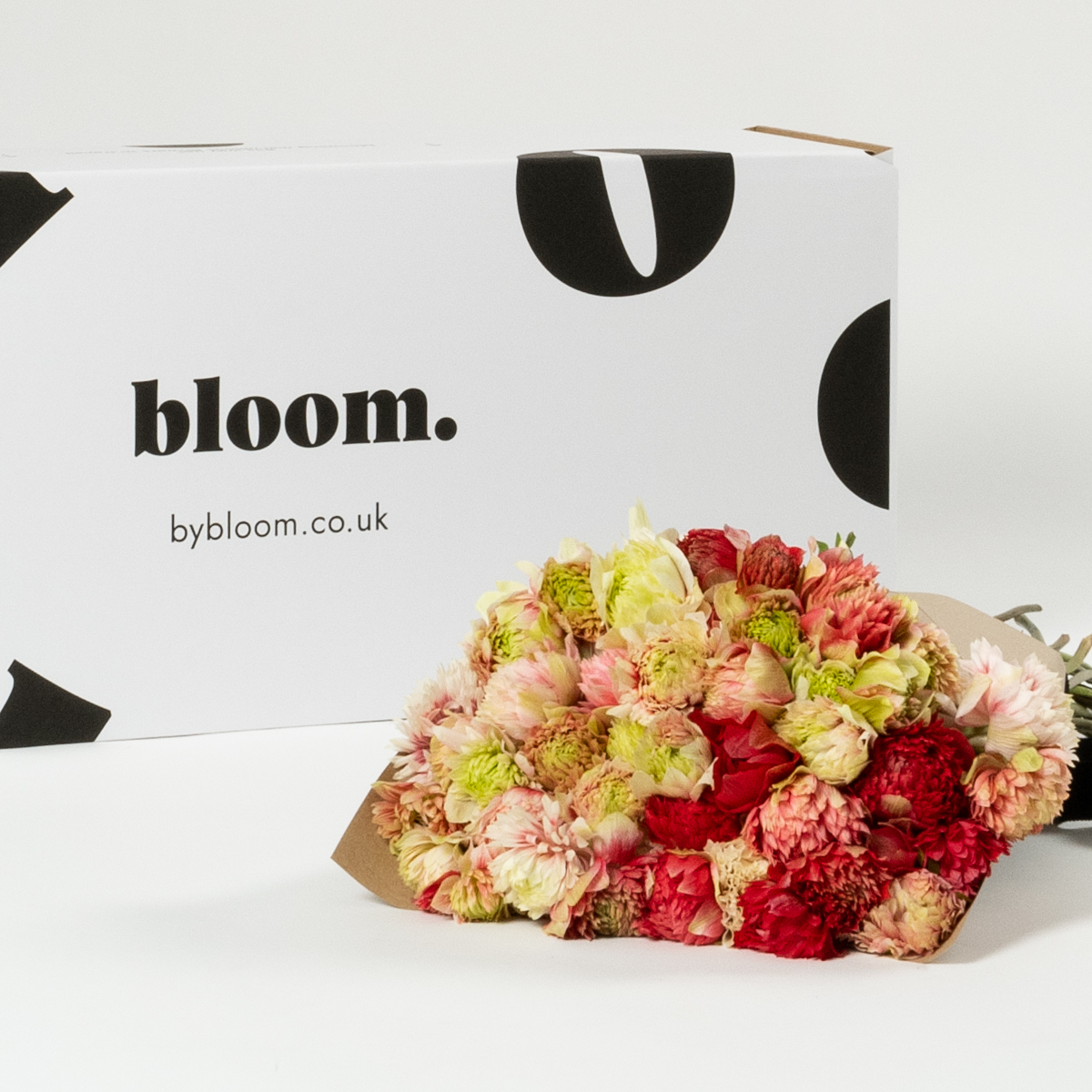 Bloom Flower Delivery | Bi-Colour Full Star Anemones