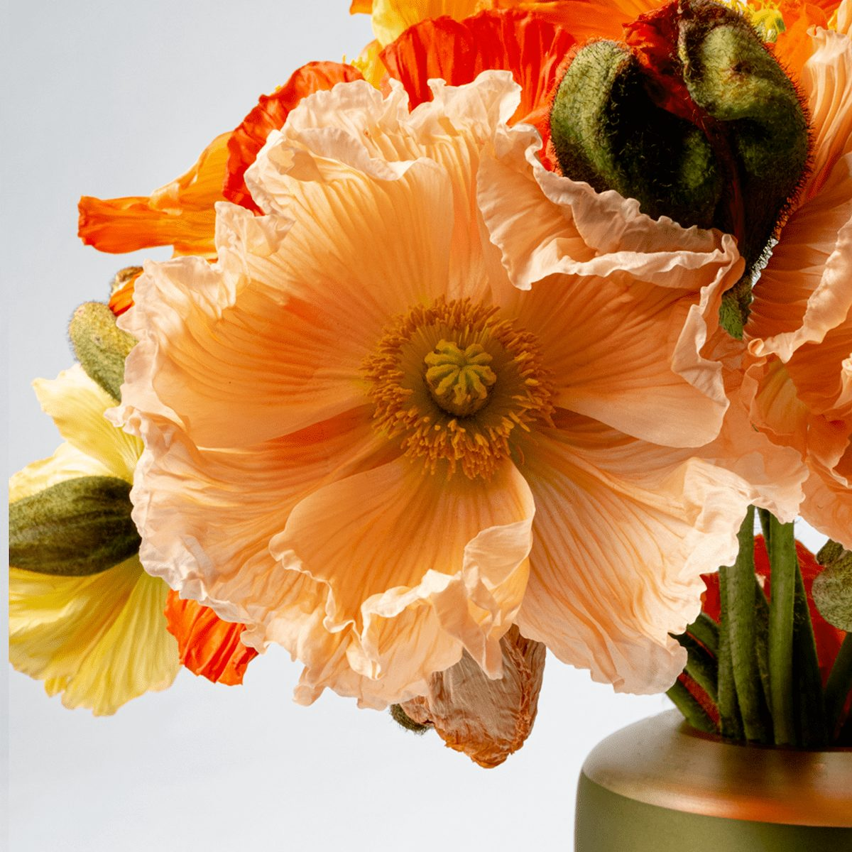 Bloom Flower Delivery | Mixed Colour Poppies