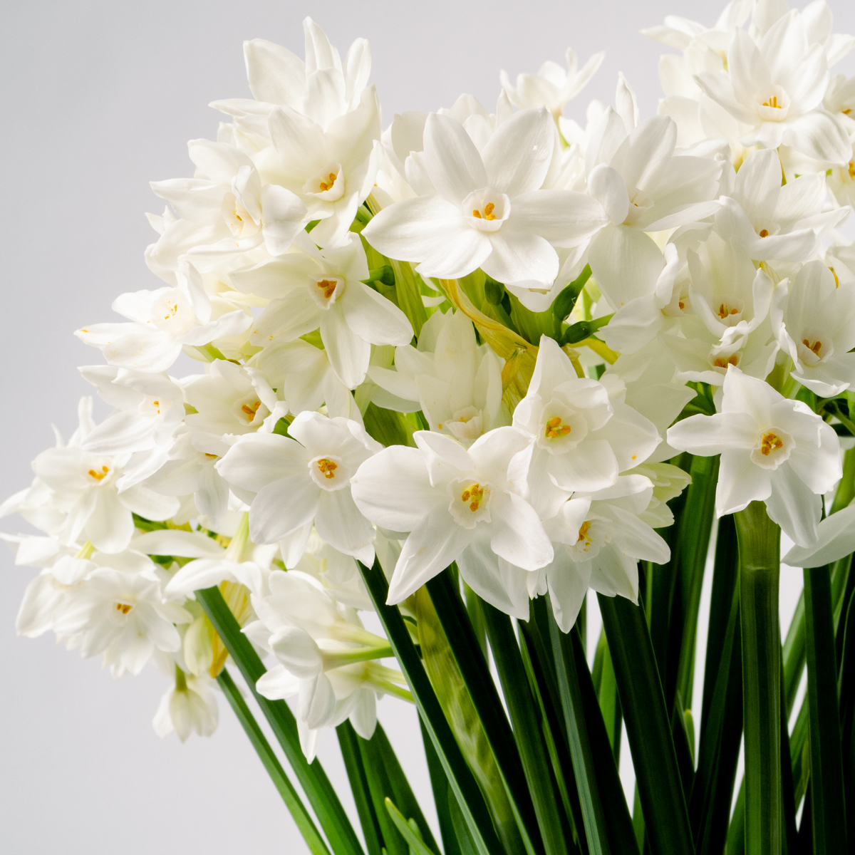 Bloom Flower Delivery | Silk White Paperwhites