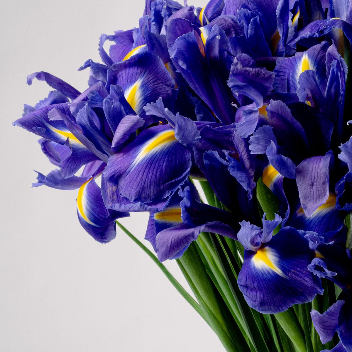 Bloom Flower Delivery | Amethyst Purple Iris