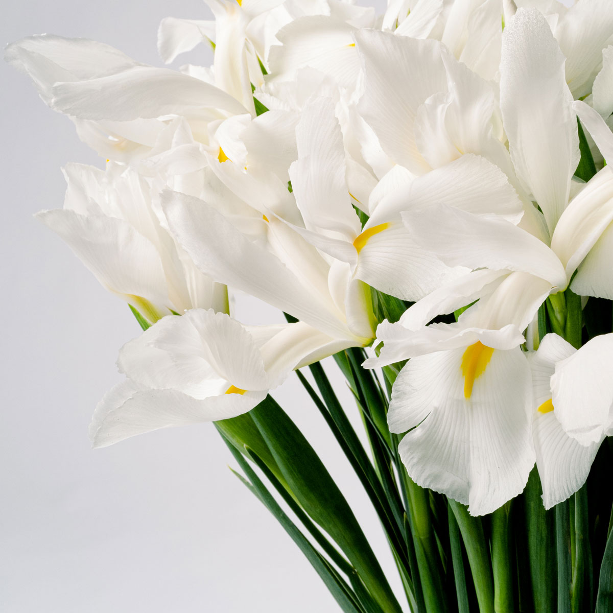 Bloom Flower Delivery | Polar White Iris