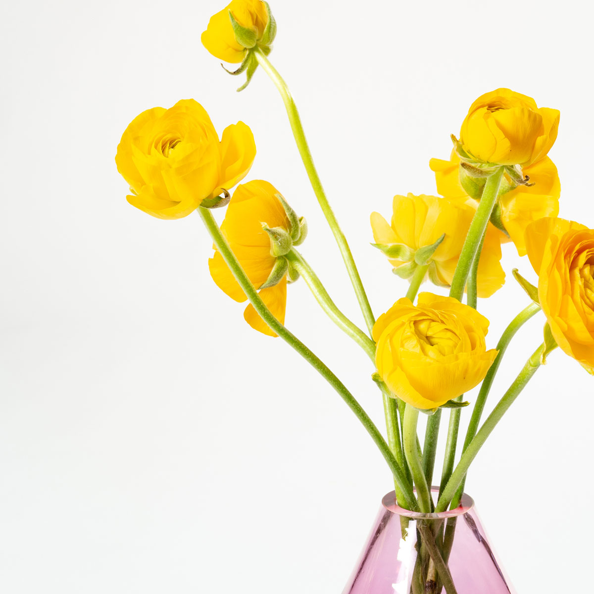 Bloom Flower Delivery | Sunshine Yellow Ranunculus