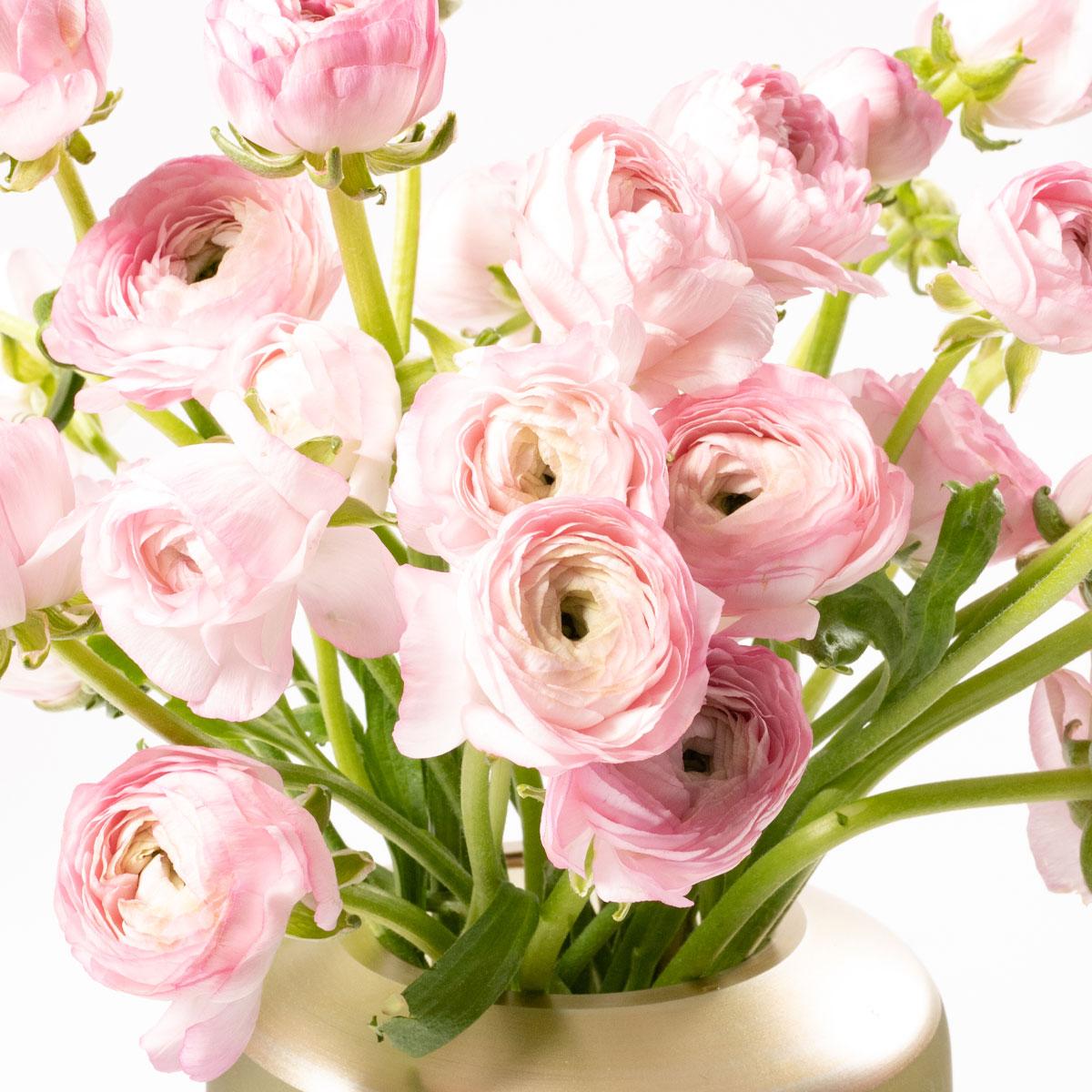 Bloom Flower Delivery | Ballet Slipper Pink Ranunculus
