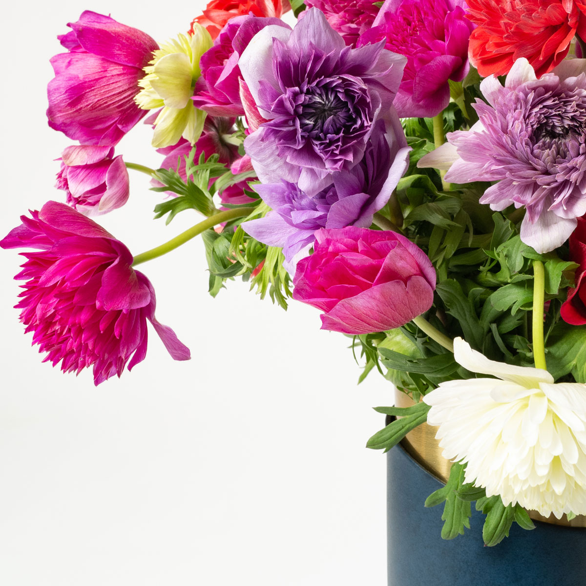 Bloom Flower Delivery | Mixed Colour Anemones