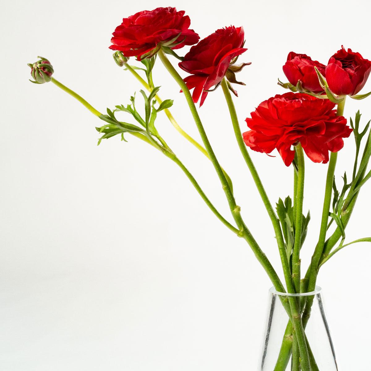 Bloom Flower Delivery | Flame Red Ranunculus