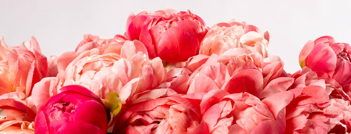 Peonies Sustainable Flower Delivery | Bloom UK Flower Delivery