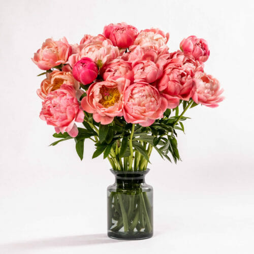 Subscription Flower for the Week - Coral Charm Peony
