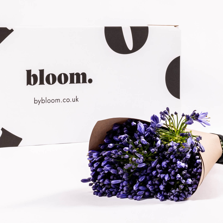 Bloom Flower Delivery | Blue Agapanthus